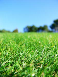 1106523_green_grass